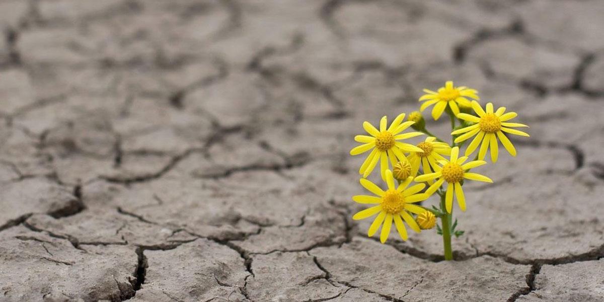 از ناامیدی به امیدی شگفت