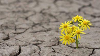 از ناامیدی به امید